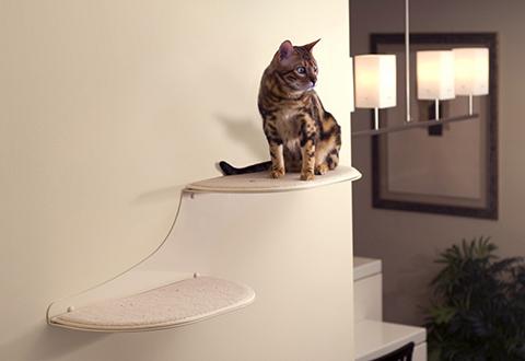 кот на полке cat on the shelf  № 1697986  скачать