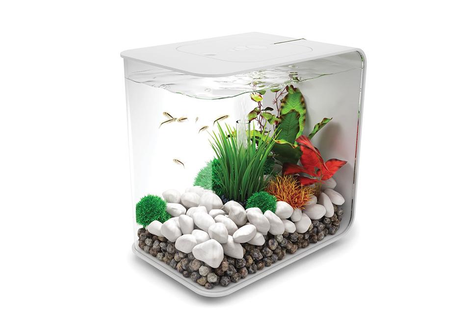 All in one 4 gallon rectangle aquarium sharper image for Rectangle fish tank